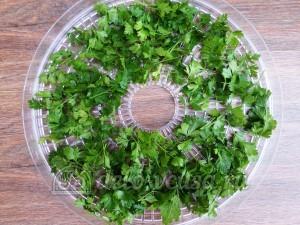 Овощная приправа: Зелень петрушки сложить в контейнер сушки