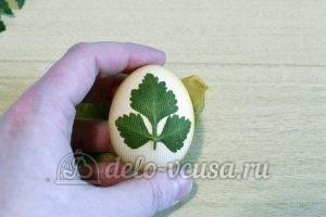 Пасхальные яйца с листочками: Завернуть яйцо в капрон
